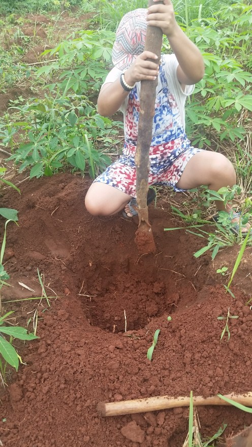Double digging - loosening up the soil to allow the root system to grow nicely.