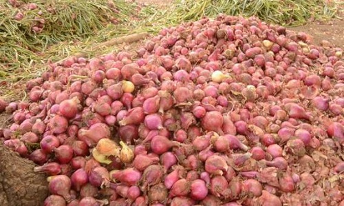 Agric ministry moves in to revive Ghana's onion industry