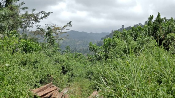 International Community raised  Reg Flag Against Govt's Plans to Mine Bauxite in Atewa Forest