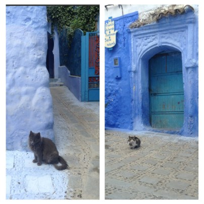 Dedicated to the Cats of Morocco