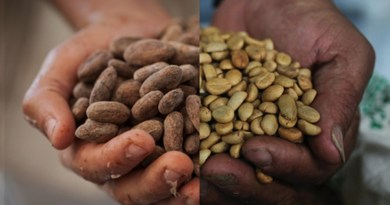 Fairtrade Adds New Certification Requirement for Cocoa and Coffee to Boost Farmer Incomes