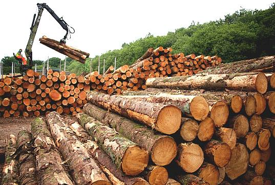 Consolidate Sir John's Gains- Domestic Timber Traders urge New Forestry Commission Boss