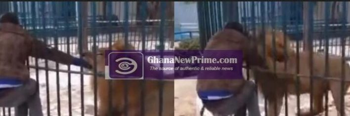 Lion in cage grabs man's hand for making fun of it