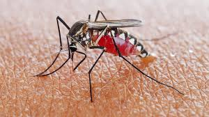 Photo of 750 Million Genetically Modified Mosquitoes Set To Be Released