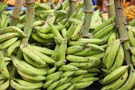 Photo of Sexual Weakness? See How To Use Unripe Plantain To Boost Your Performance In Bed