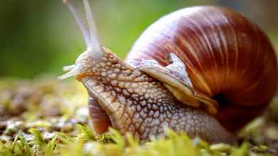 Photo of Health Benefits of Snail You Never Knew😲😳