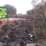 'Wee' smokers accused of Achimota Forest fire