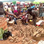 There's no shortage of cassava – Ministry of Food and Agriculture