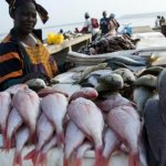 Ghana, Italy agree to create fishery clusters