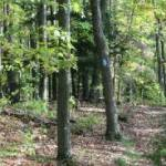 Save Atiwa forest – Wildlife Society