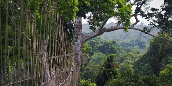 Kakum National Park and Canopy Walkway