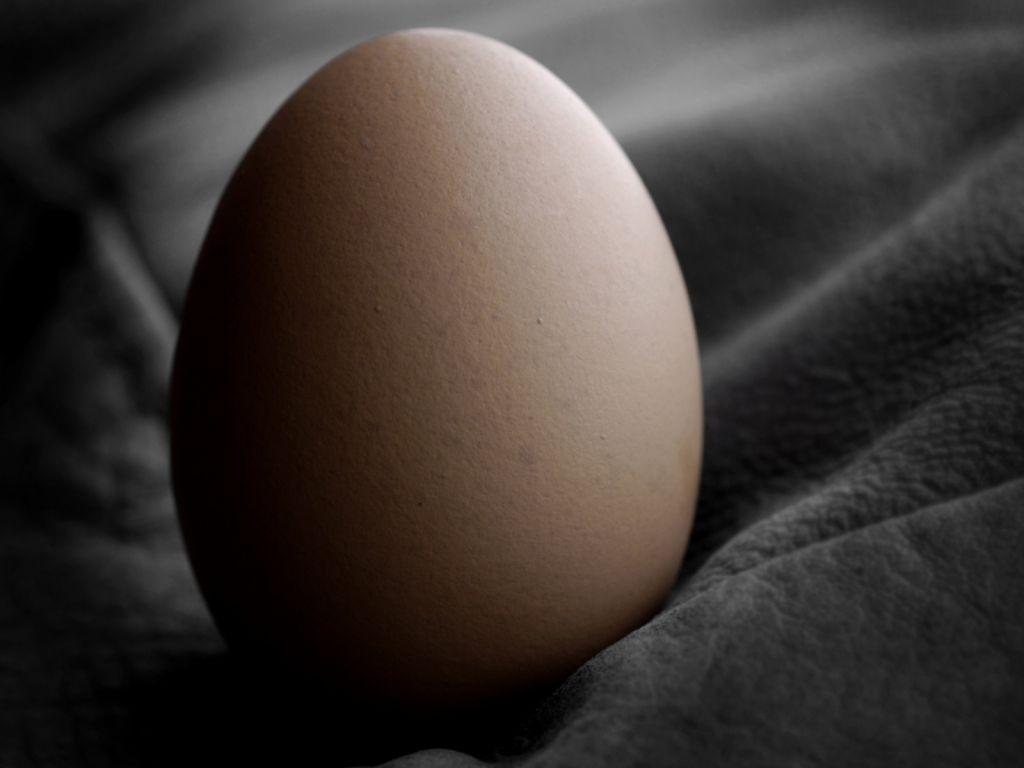 Сила куриного яйца