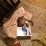 И снова котик Тико