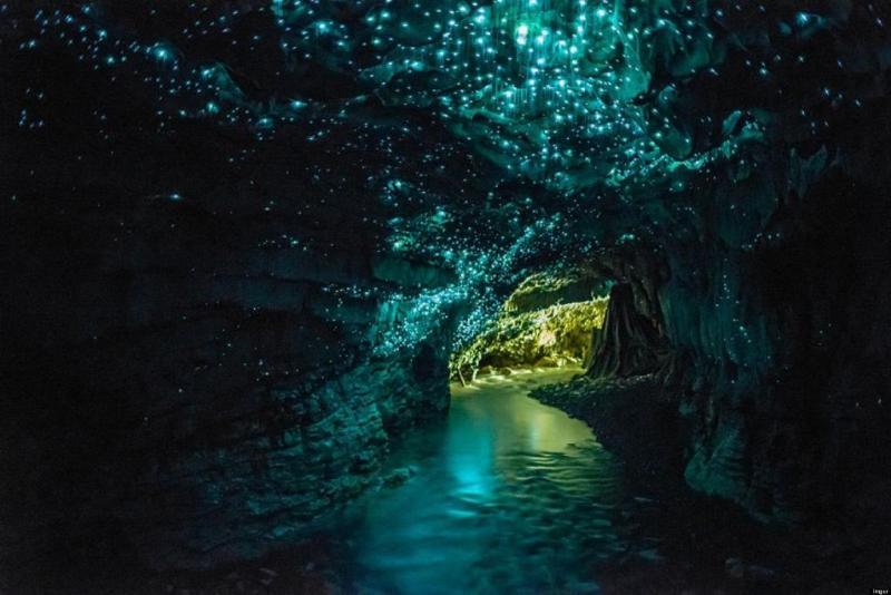 Светлячки пещеры Вайтомо