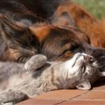 Собака отсутствовала дома неделю кошка соскучилась ее реакция невообразима