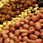 Картофель. Немного о главном.
