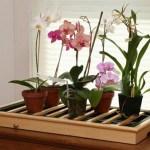Поливаем орхидеи.