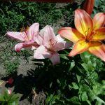 Цветы от Лебезовых! Сарань. Казахстан!