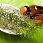 Целебные свойства масла чайного дерева.