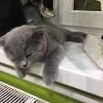Как ввезти котенка или кошку в Канаду ?
