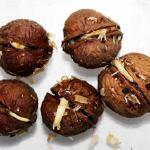 А вы знаете о пользе пророщенного грецкого ореха?