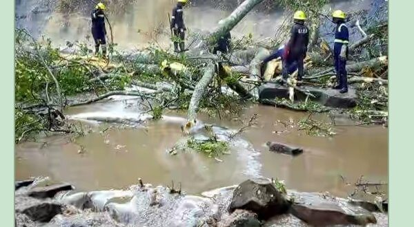 Another Disaster: Tree Kills 20, Injures Others At Kintampo + Photos