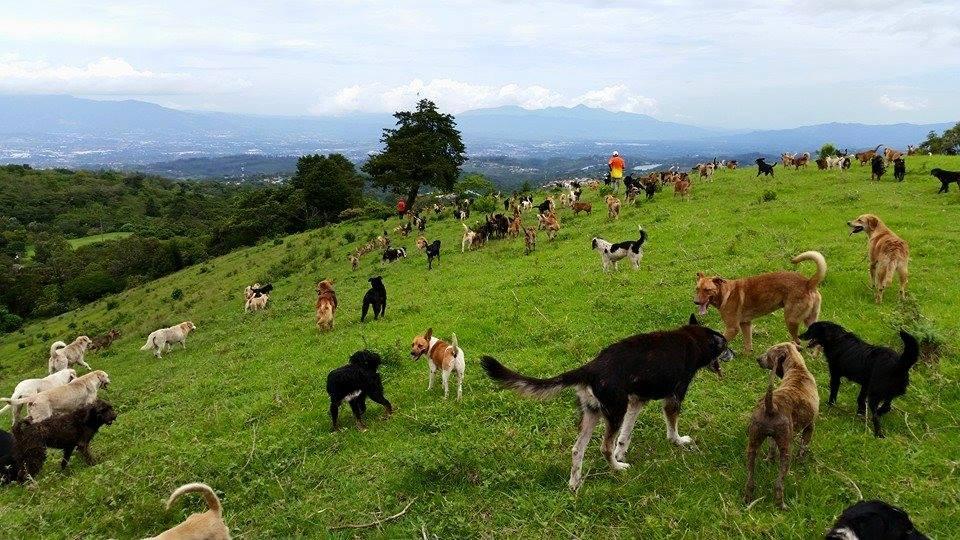 Shelter In Costa Rica Where 900 Dogs Roam Free