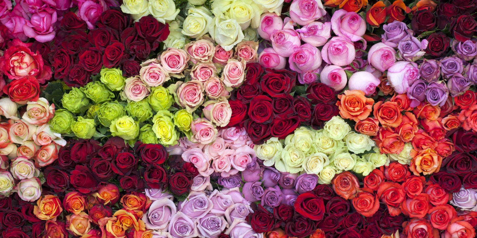 Image result for pink red yellow roses big bouquet