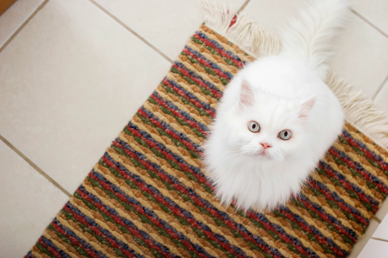 Image result for white cat hair in oven
