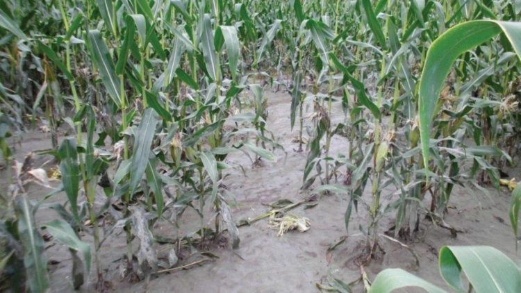 Flood destroys several hectares of farmlands in Bawku enclave
