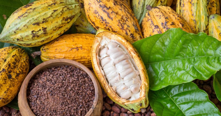 Cocoa farmers urged to embrace mass spraying exercise