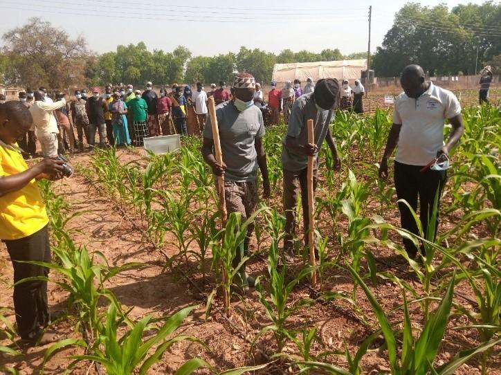 CSIR-SARI trains 64 farmers in Upper East Region
