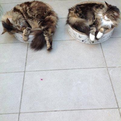 Cats- The silent foetus killer