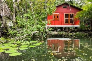 Living in the Mangroves (II)