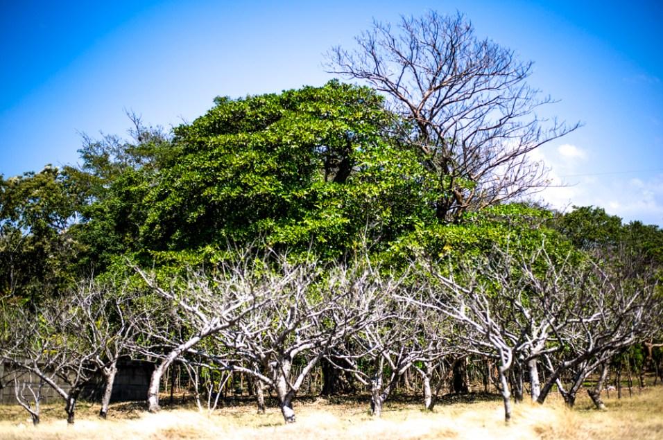 Vegetation oberhalb der Laguna