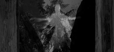 Taatsi-Amidst-The-Trees-2014