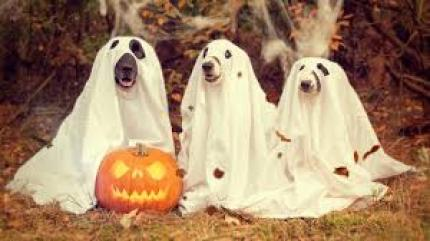 Three dogs in ghost costumes https://www.goodfreephotos.com/holidays/halloween/dogs-in-ghost-halloween-costumes.jpg.php