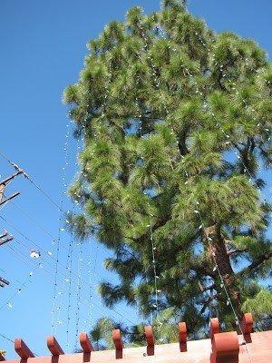 IMG_4265 GH Tree