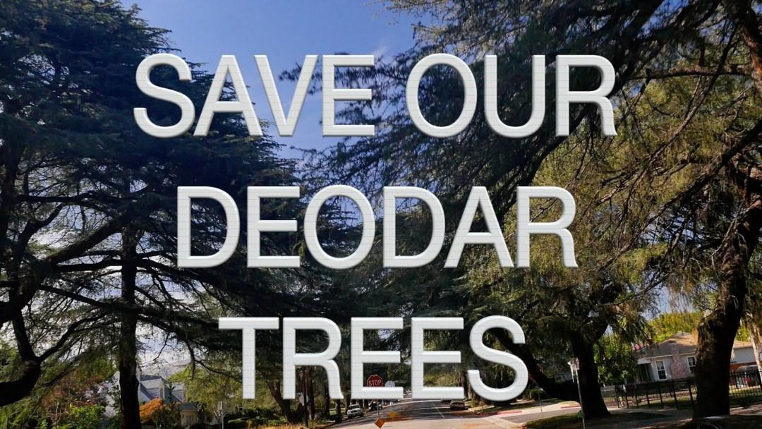 Historical Deodar Trees
