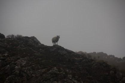 giro della scozia climb trek mountainspace giacomo longhi michele gusmini elisa broggi camp cassin dynastar racer orcadi skye arrampicata scotland greta molinari highland hoy (31)