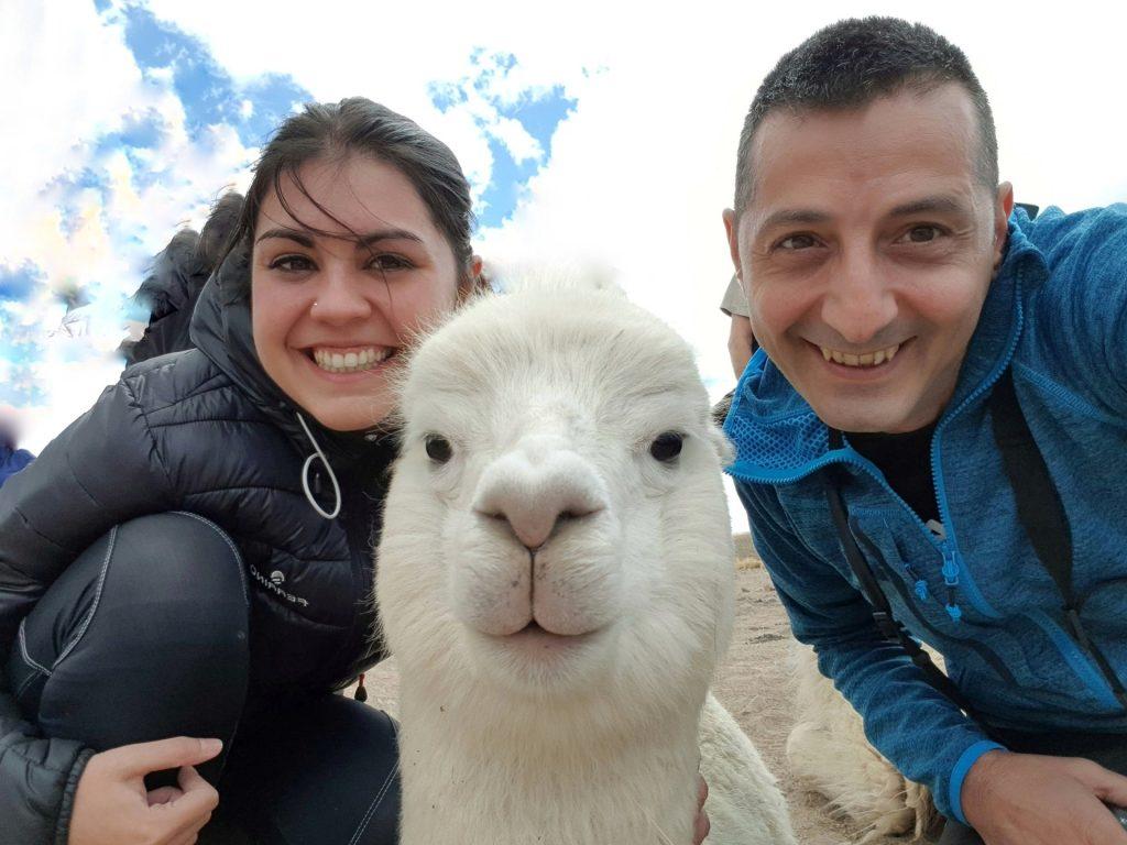 Alpaca da Arequipa a Chivay