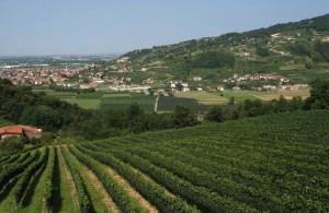 strada del vino e dei sapori