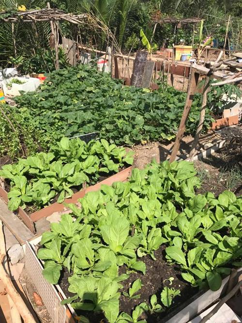 Sống trên tầng 11 nhưng chiều đến, Châu thường cùng các con xuống vườn xin nước tưới rau, bắt sâu. Ban đầu, Châu trồng rau ở ban công nhà nhưng giờ, vị trí đó được dùng để phơi cá.