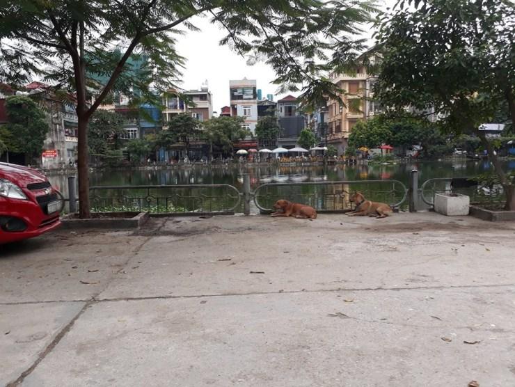 Vụ người đàn ông cụt chân bị chó Becgie cắn chết ở Hà Nội: Nỗi lo lắng bấy lâu của dân cư trong ngõ đã thành sự thật - Ảnh 1.