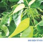 """Những loại rau xanh giúp nam giới bổ sung """"viagra"""" tự nhiên"""