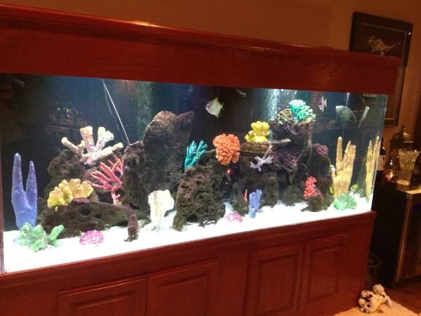 100 gallon fish tank dimensions in feet 2017 - Fish Tank