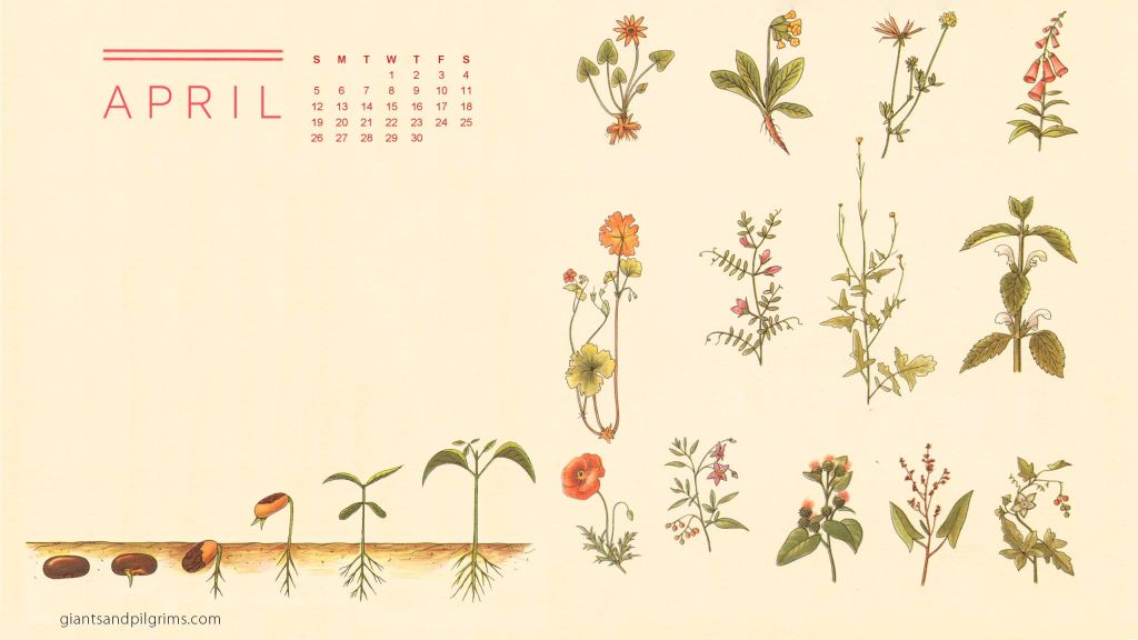 April 2015 Desktop And Iphone Wallpaper Giants Pilgrims
