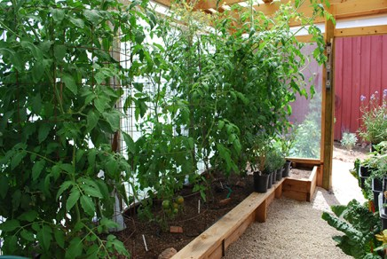 inside greenhouse looking out2