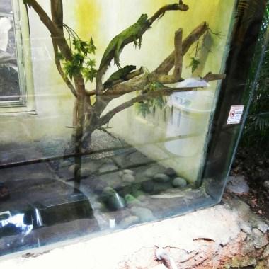 Lizards on display