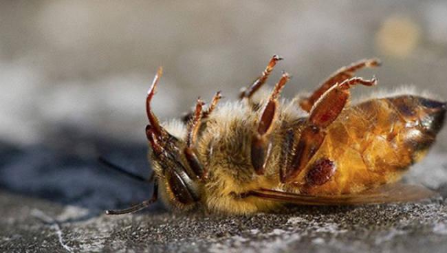 Risco de Extinção de Abelhas no Brasil, Pode Impactar a Economia 17